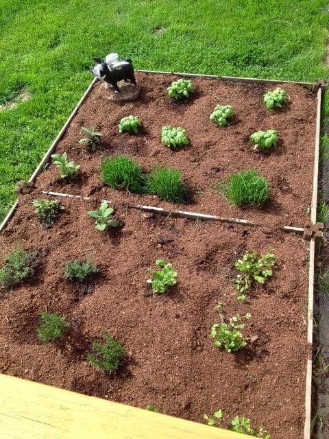 Freshly planted herb garden